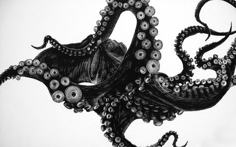 Octopus drawing, artist unknown