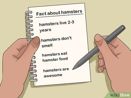 How To Convince Your Parents To Get A Pet Hamster