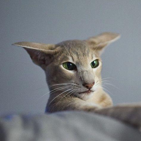 buzzfeedanimals 🐝🐝🐝🐝🐝🐝. . . . . #cat...