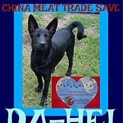 Pet Card German Shepherd Dogs Rescue Dogs
