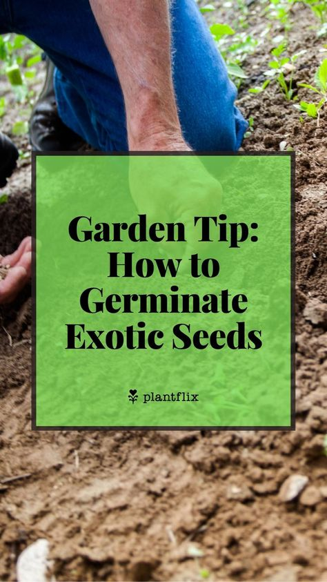 Gardening Ideas: How to Germinate Exotic Seeds