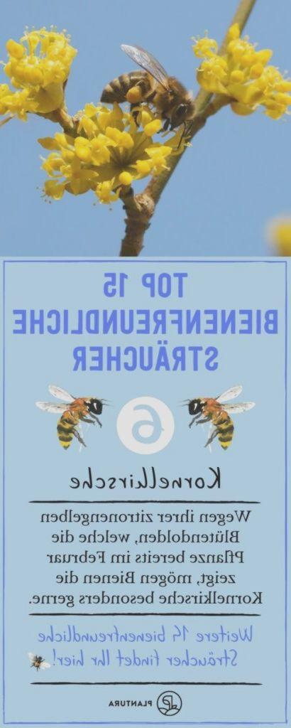 Top 15 Bienenfreundliche Straucher Kornelkirsche Um Gegen Das Bienensterbe Planting Flowers Bee Friendly Green