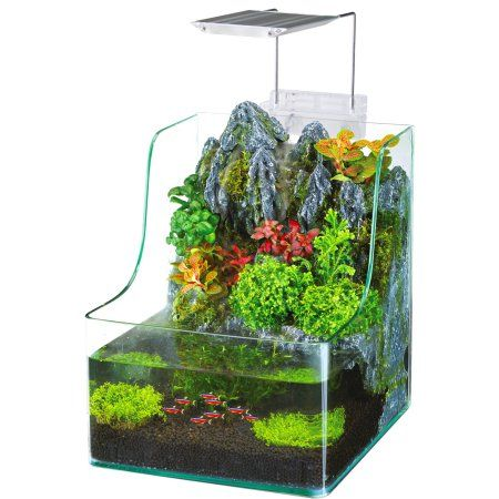 Pets Planted Aquarium Aquarium Aquaponics