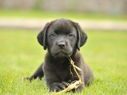 The Top Ten Most Popular Registered Dog Breeds In The Uk In 2020 Dog Breeds Pedigree Dog Puppies