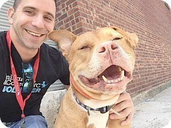 Drive Human Drive Pitbull Terrier Dog Adoption Pitbulls