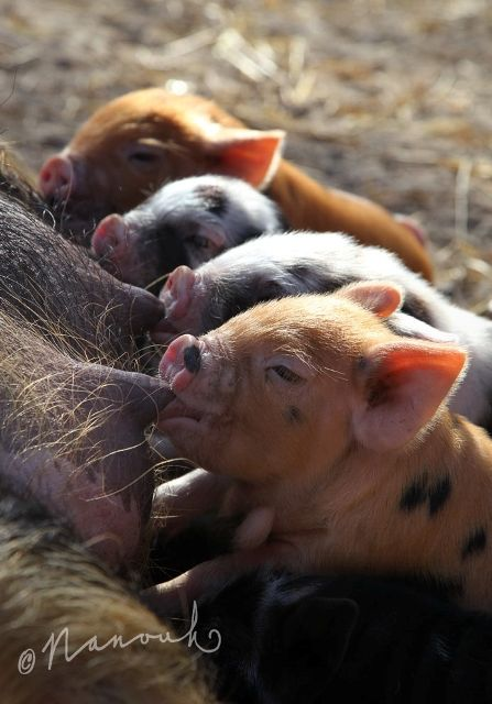 All creatures great and small. What have we done to trillions and trillions of individuals in the flesh farming industry? What kind of society have we been indoctrinated into to?