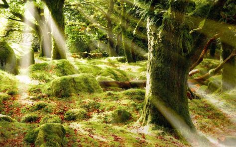 Moss in the forests