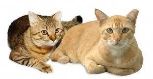 Cats Reddit Arecatsbetterthandogs Pet Care Cats Feline Leukemia