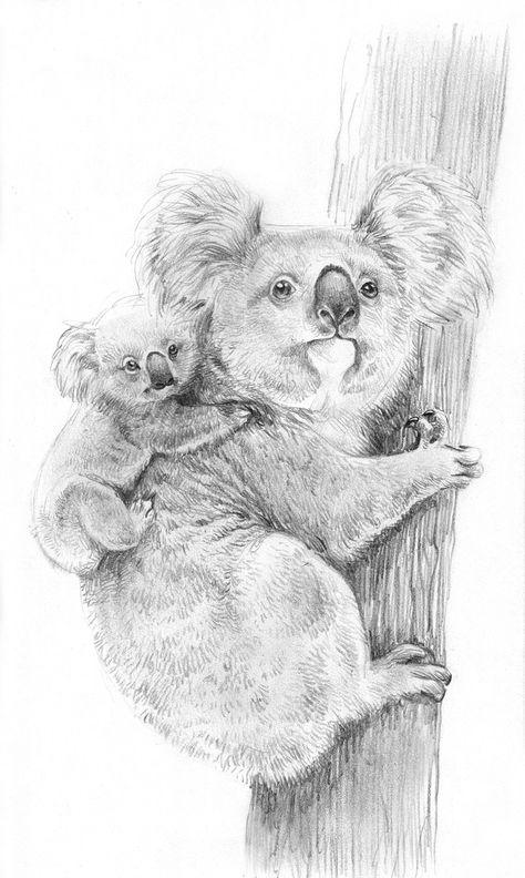 Coloriages A Imprimer Koala Numero 603440 En 2020 Coloriage