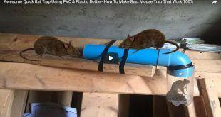 f4a54e3537a124a0859499cb20297c7e - How To Get Rid Of Mice In Compost Bin