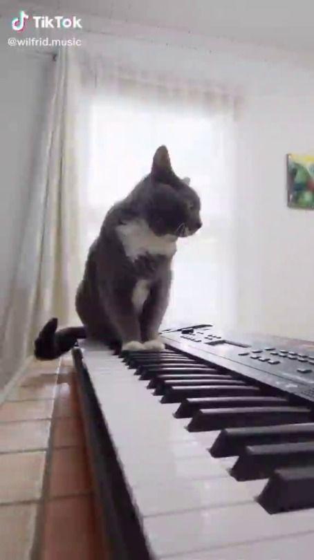 Pin On Cats Gotta Love Em