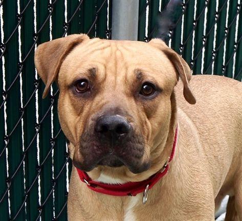 New York Ny Dini 67661 Mixed Breed Nycacc Pets Shelter Buddy Com Cute Animal Photos Animals My Animal