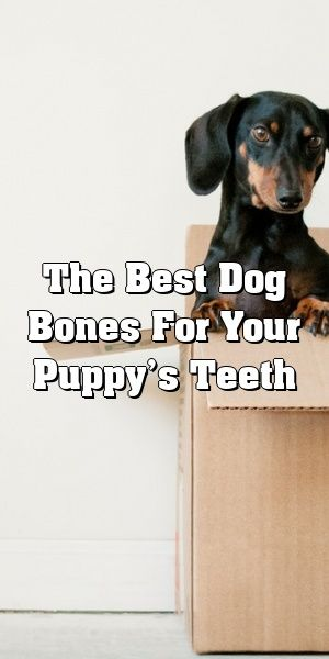The Best Dog Bones For Your Puppy S Teeth Dog Bones Puppies Dogs