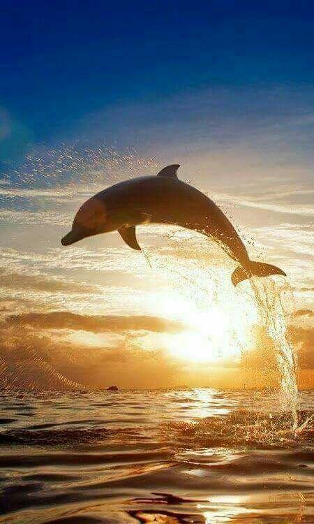 Epingle Par Ana Rebeca Sanchez Sur Dolphins So Pretty Papier Peint Coucher De Soleil Image De Dauphin Animales