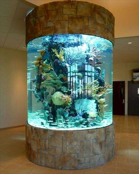Fine Amazing Tips Your New Aquarium Decorations