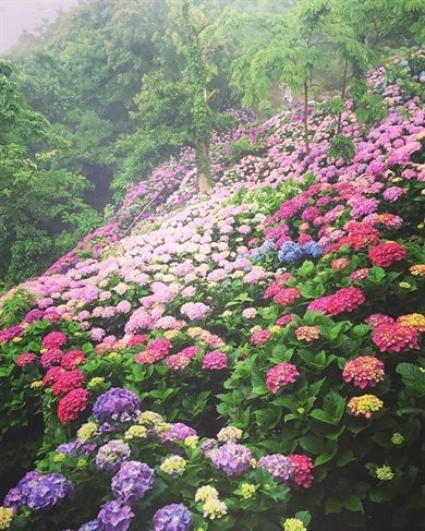 Martha Stewart Gardening Clogs Women S Garden Rope Top Edging Gardening Humour Or Humor Pictures Very Fu Beautiful Gardens Beautiful Flowers Flower Garden