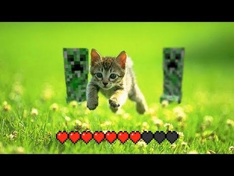 Minecraft MEMES That Cured my Cancer - YouTube