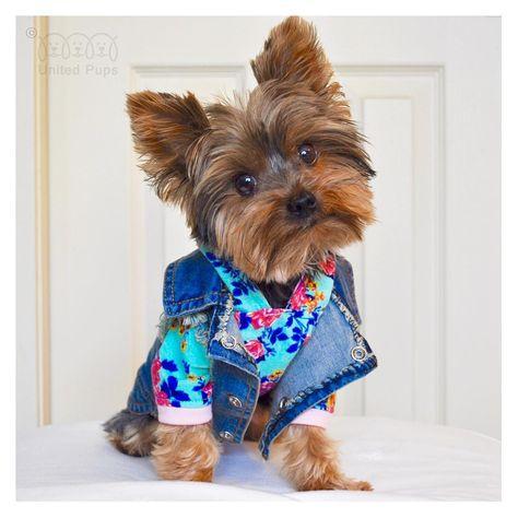 Time for a fashion show!  Mix and match style! 😀 Thank you Kloe @therealkloek  Jean jacket info  www.unitedpups.com/jacket #jeans #denimvest #denim #jeanjacket #fashion #style #maltese #frenchie #shihtzu #poodle #pomeranian #chihuahua #beagle #yorkie #pug #dachshund #jackrussell #corgi #puppy #dog #pet #puppylove #stylishdog #unitedpups #cool #fashionshow #mixandmatch #weeklyfluff