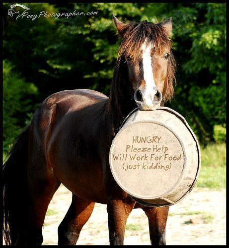 HUNGRY Pleeze Help  Will Work for Food (just kidding) - Horses Funny - Funny Horse Meme - #horsememe #horse #funnyhorse -  HUNGRY Pleeze Help  Will Work for Food (just kidding)  The post HUNGRY Pleeze Help  Will Work for Food (just kidding) appeared first on Gag Dad.