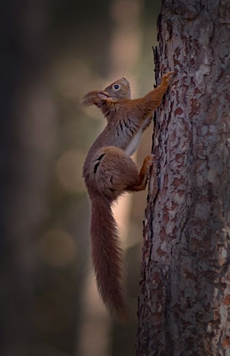 The only way is up by Jane Dagnall