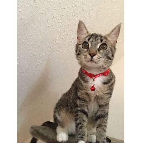 Pet Dog Neck Scarf Puppy Cat Adjustable Bandana chief cute pet Collar Necker hot