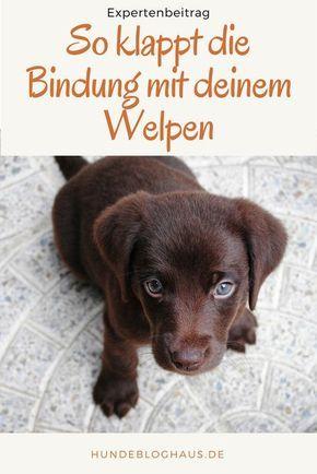 3 Grunde Warum Du Mit Deinem Welpen Keine Gute Bindung Aufbauen Wirst Und Wie Du Es Besser Machst Welpen Hunde Welpen Erziehung Hunde Welpen