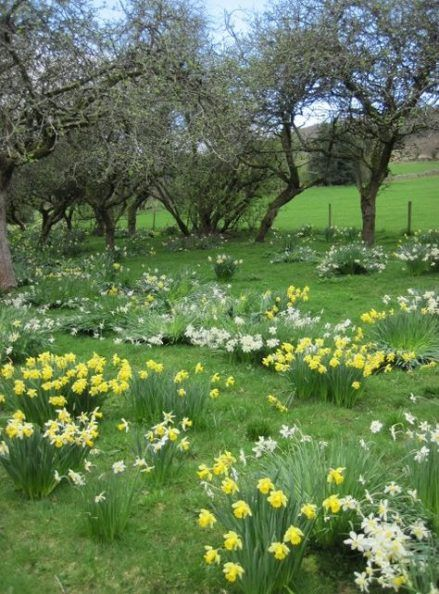 57 Ideas For Photography Landscape Country English Countryside Spring Scenery Countryside Landscape Garden Whimsy
