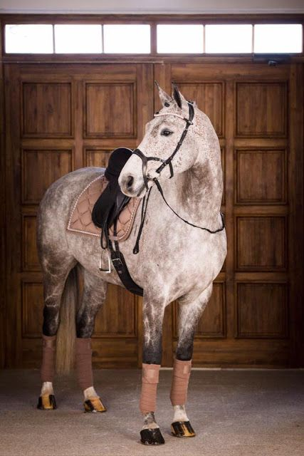 Fortunate tripled horse riding outfits Fortunate tripled horse riding outfits - Art Of Equitation Cute Horses, Pretty Horses, Horse Love, Beautiful Horses, Equestrian Outfits, Equestrian Style, Equestrian Fashion, Horse Riding Clothes, Horse Fashion