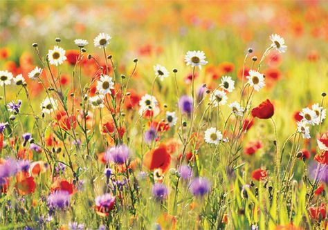 There is something about wildflowers, I want to stand in this field