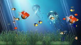 Ms Rachels Room Download Full Hd 3d Aquarium Wallpapers Fish Background Background Pictures Rainbow Wallpaper
