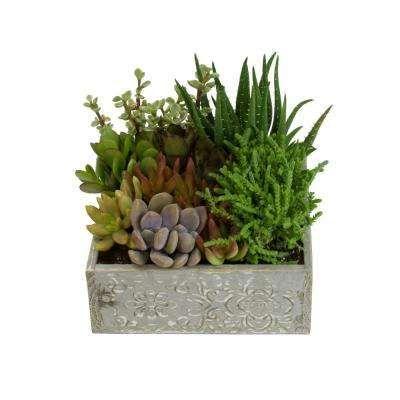 Assorted Colors Succulents Cactus Plants Plants Garden Flowers The Home Depot Succulents Garden Plants Succulents