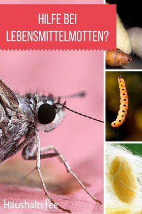 Lebensmittelmotten Erfolgreich Bekampfen Lebensmittelmotten Lebensmittel Motten Bekampfen Und Motten In Der Kuche