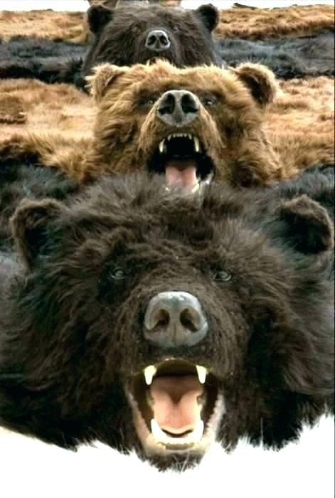 Adorable Real Bear Rug Pics Luxury