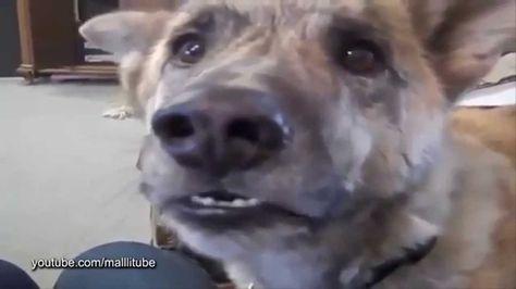 موقف مضحك كلب يتكلم مثل الانسان مضحك جدا حيوانات تتكلم