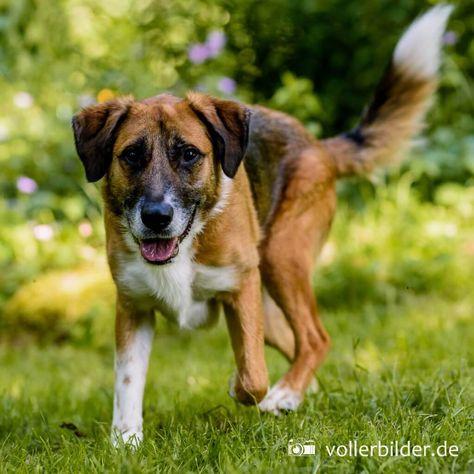 Wie findet man einen guten Hundesportverein? | Hundesport ...
