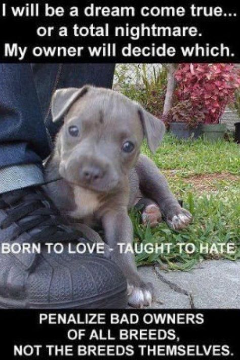 Pitbull Love 3 Animals Pitbulls Cute Animals