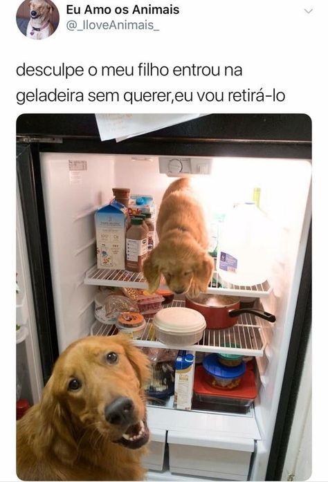 Desculpe o meu filho entrou na geladeira sem querer…