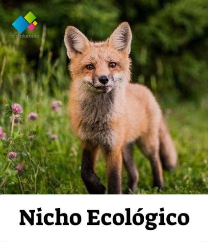 Nicho Ecologico Nicho Ecologico Factores Bioticos Y Abioticos Medio Ambiente