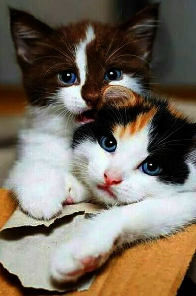 Now You Can T Leave Me Cute Cat Breeds Cute Animals Images Cute Baby Animals