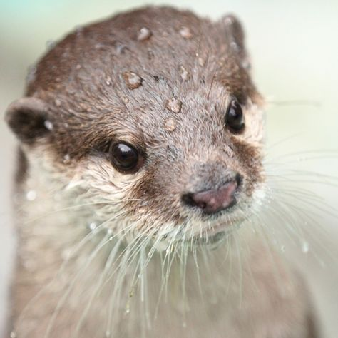 Otters are my favorite attraction at the zoo---I could sit and watch them for hours! :)
