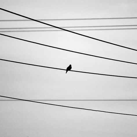 Image result for grey pigeon on a wire against a grey sky pinterest