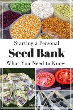 Whether you are preparing for the long-term future or just for the next season, you need to start a seed bank for your family. Find out what you need to know to make your own this year Homestead Gardens, Farm Gardens, Growing Plants, Growing Vegetables, Saving Seeds From Vegetables, Growing Tomatoes, Garden Seeds, Garden Plants, Organic Gardening