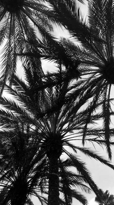 Black And White Tree Black And White Tree Black And White Wallpaper Iphone Black And White Wallpaper