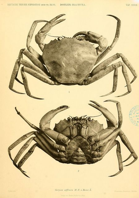 n136_w1150 by BioDivLibrary, via Flickr