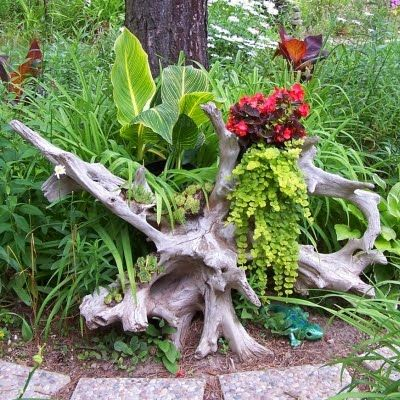 Image result for driftwood in gardens