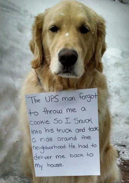 20 Most Hilarious Dog Shaming Photos Ever Funny Animal Photos