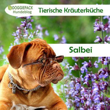 Tierische Krauterkuche Salbei Fur Hunde Hunde Hunde Ernahrung