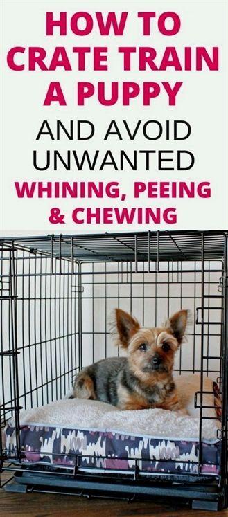 Dog Training Fayetteville Nc Dog Training Quotes Free Dog