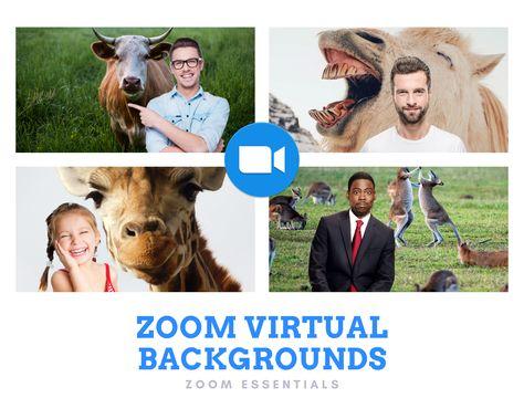 Zoom Virtual Background Funny Animals Funny Animals Virtual Greenscreen