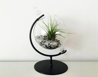 Terrarium Terrarium Kit Air Plant Tillandsia Desk Black And White Desk Plants Plant Decor Plants